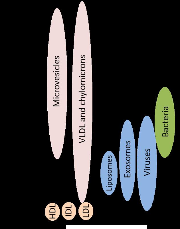 奈米表面蛋白分析 NanoFCM Size Distribution_Reliance Biosciences_Molecular diagnostics via exosome